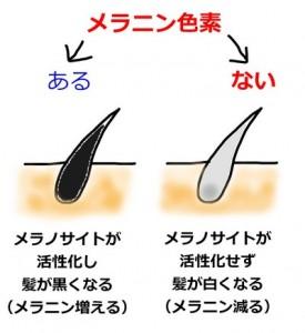 hanage-siraga-mekanizumu1