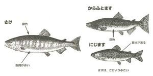 鮭のムニエル2